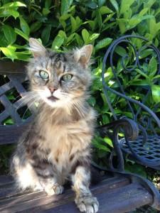 Кот, просто gatto